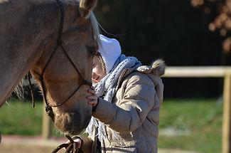 Débourrage jeunes chevaux. Travail et entrainement du cheval. Education du poulain. Toulouse, Montauban, midi-pyrénées. Stage ethologie en tarn et garonne