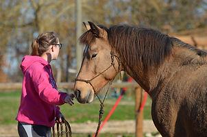 Education du cheval, débourrage, stage à domicile entre Toulouse et Montauban. Formation savoir 5 La Cense