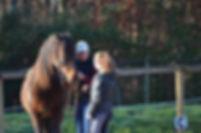 Comprehension et education du jeune cheval. Travail au sol à pieds ou monté. Stages en midi-pyrénées, tarn et garonne et haute  garonne