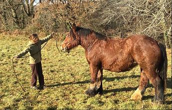 Stage et cours éthologie à domicile en midi-pyrénées, haute garonne, lot et garonne. débourrage chevaux, améliorer la relation avevc son cheval