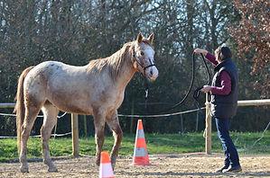 Cours et stage ethologie et équitation naturelle à Labastide Saint Pierre et à Montricoux proche Toulouse et Monauban. Chevaux au travail et en pension