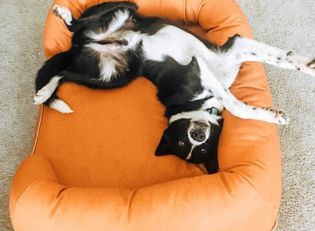 How to Truly Tire Out Your Dog  (Mentally + Physically)