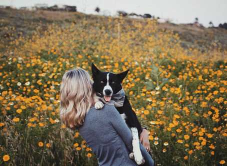 6 Tips for Photographing Your Dog