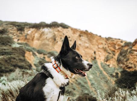 Exploring the Palos Verdes Peninsula: Ladera Linda