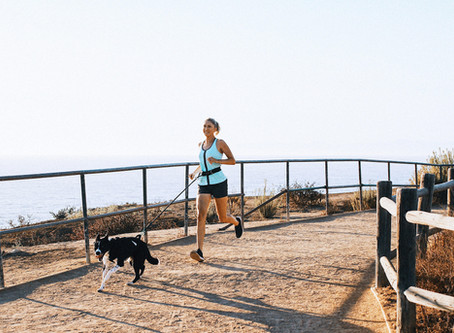 Canicross 101: Start Running With Your Dog In 5 Steps