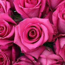Cotton-Candy-Agrirose-Close-350_b4c17981