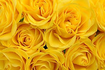 02_yellow_what-your-valentine-s-flowers-