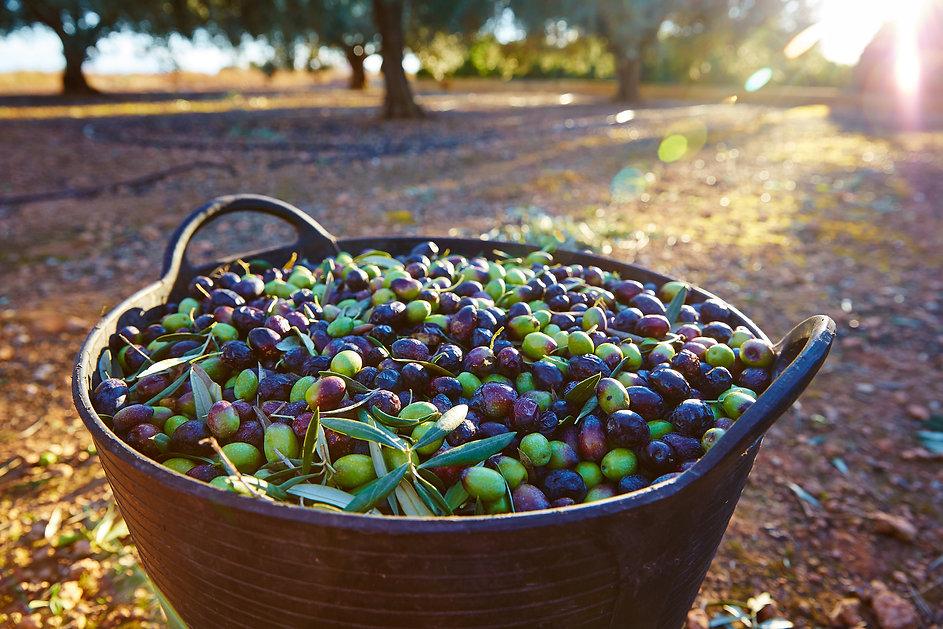 Bucket of olives.jpg
