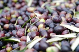 Our olives