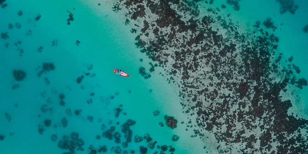Ocean pollution, protecting our oceans from toxicity and plastic