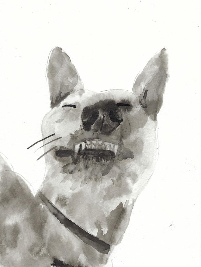 כלב.jpg
