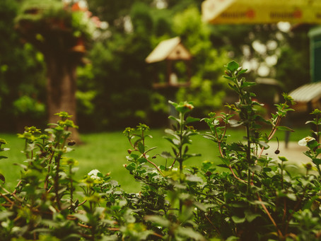 Why Lawns are Awful for the Environment – and 3 Beautiful Earth Saving Alternatives