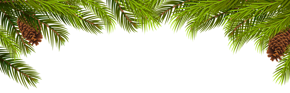 Pine_Branches_and_Cones_Decoration_PNG_C