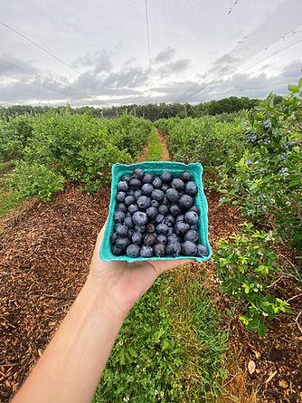 Bowman You-pick Blueberries.jpeg