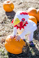 Bear Wallow Chicken Costume