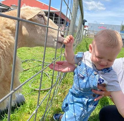 Bowman Farm Animals.jpeg