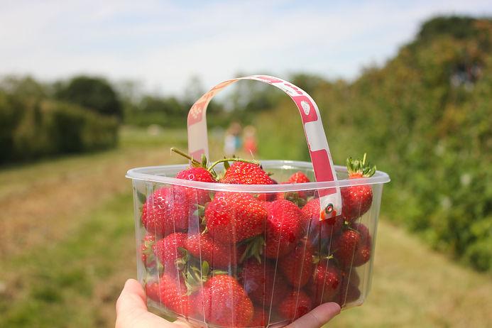 hand-holding-strawberry-haul-from-strawb