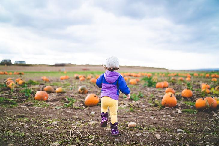 Girl Running in Pumpkin Patch Stock.jpg