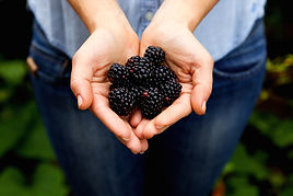 woman-holding-bunch-of-delicious-blackbe