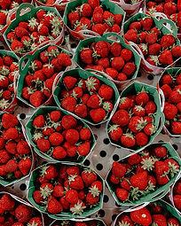 Bowman_Strawberries.jpg