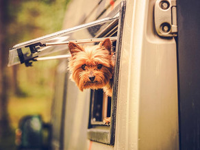 5 Things To Keep In Mind For RV Travels & Your Pets