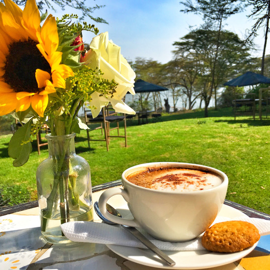 Sunflower and a cappucino