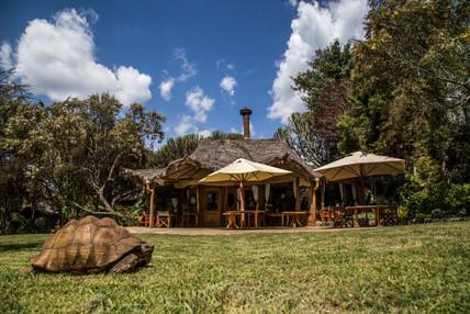 Chui lodge veranda and resident tortoise