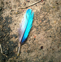 Roller feather