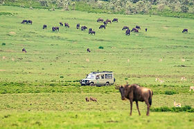 Game Drive on the plains