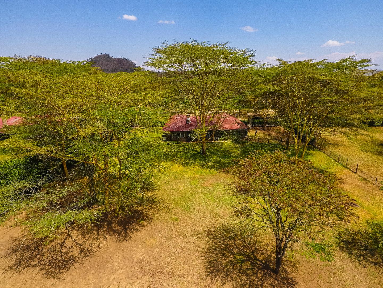Through the Acacia Trees