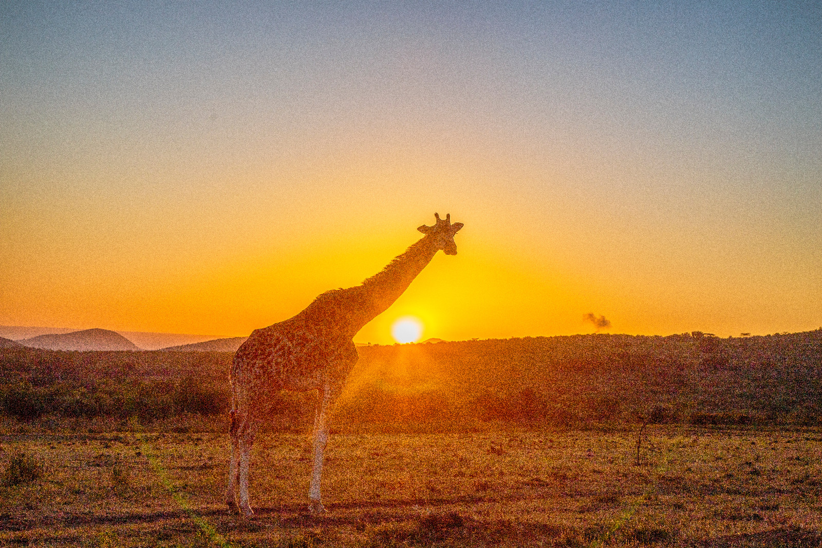 Girraffe and Sunrise