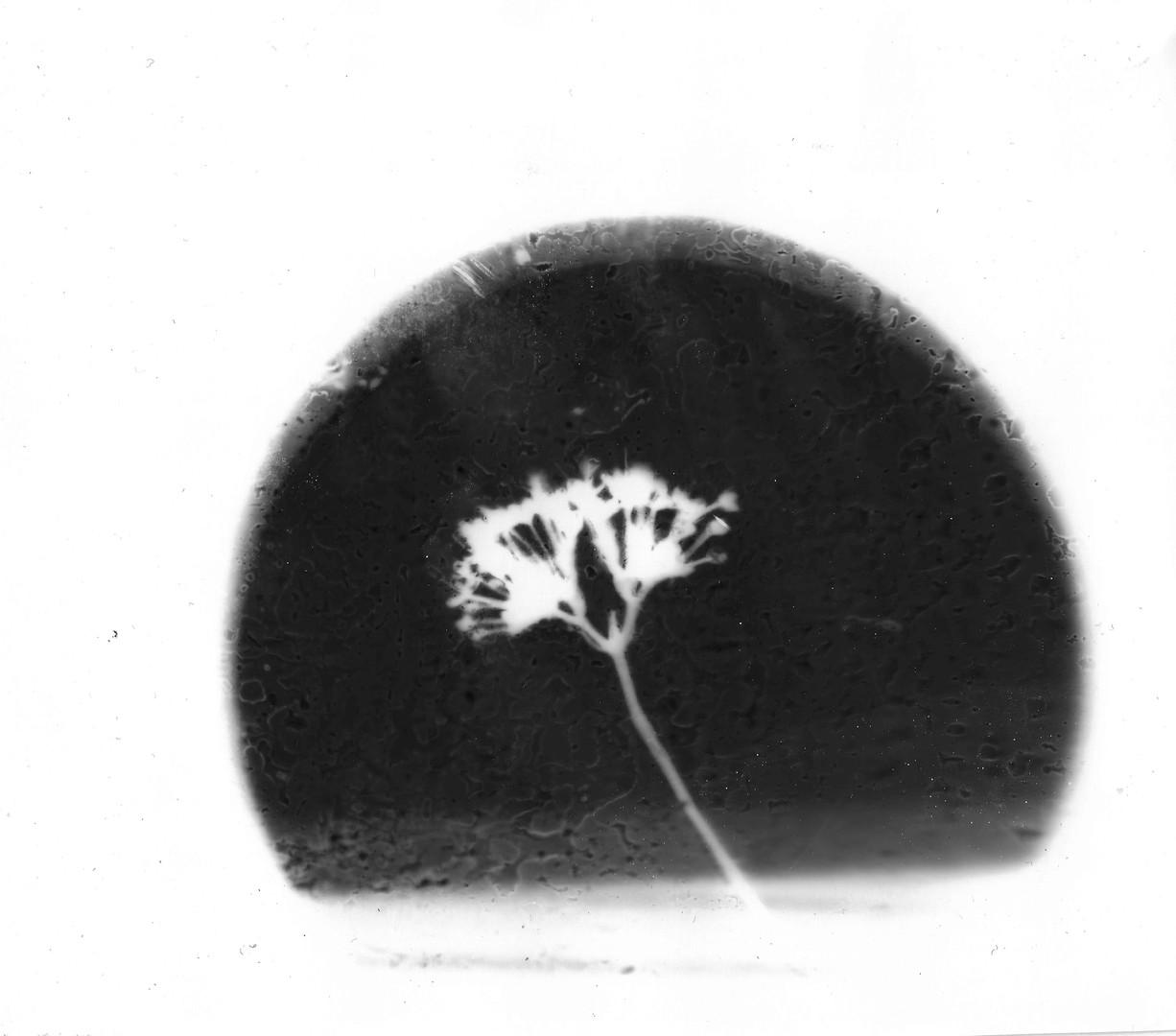 Flower in Light
