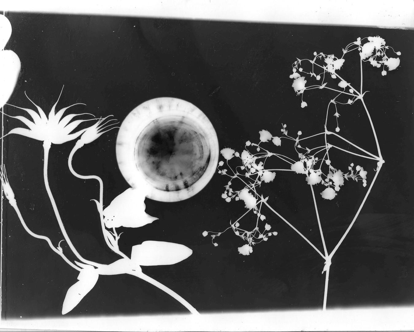 Flowers in Moon