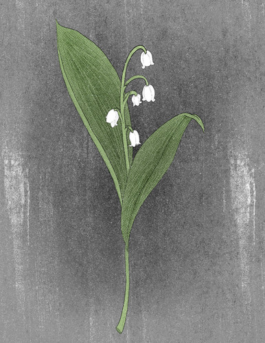 4-lily of the valley v2.jpg