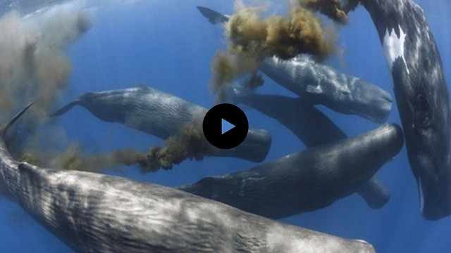 How Whales Change Climate, LENTH: 4:50