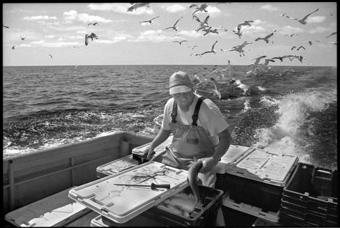 Hickeyfishing_DCA.jpg