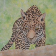 """Leopard Cub"""