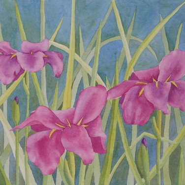 """Purple Irises"""