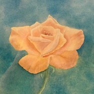 """""""A Yellow Rose"""""""