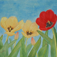 """""""Red And Yellow Tulips"""""""