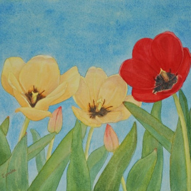"""Red And Yellow Tulips"""