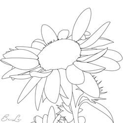 Zonnebloem-kleurplaat-BiLi