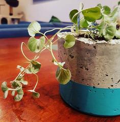 pot plant.PNG
