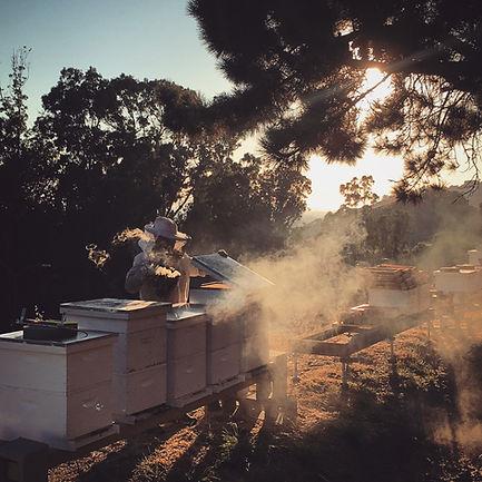 oakland hills beekeeper