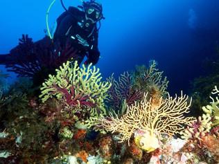 Du lycée Esabac du Convitto RC à manager pour la sauvegarde du milieu marin