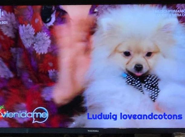 Ludwig loveandcotons.jpg