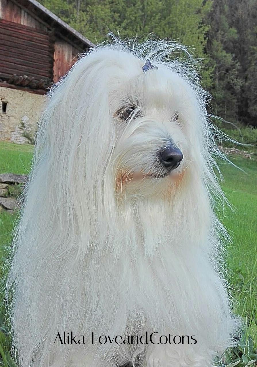 Alika LoveandCoton 2014 - Trentino Alto Adige_edited