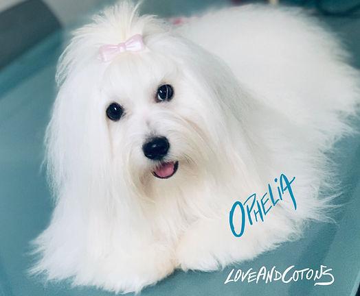 Ophelia19.jpg