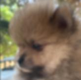 Cucciolo luglio19.png