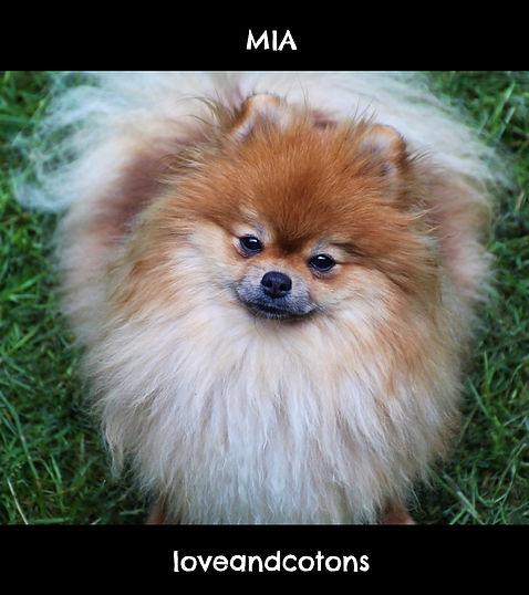 Mia | loveandcotons | spitz tedesco nano